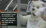 Penguins' Fans Taunt Bryzgalov With Bear Costumes