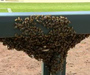 Bees Delay Rockies-Diamondbacks Game