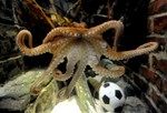 Octopus Picks Germany over Argentin